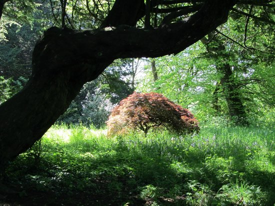 Howick Hall: In the woods