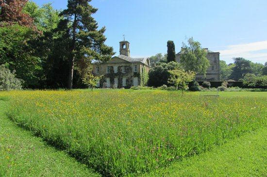 Howick Hall: One of wild-flower meadows full of butterflies