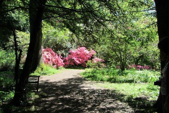 Howick Hall Gardens: Vivid Azaleas