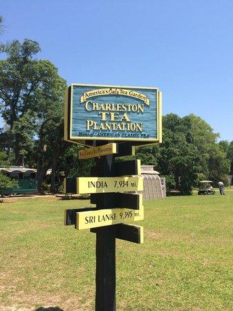 Charleston Tea Plantation: Charleston Tea
