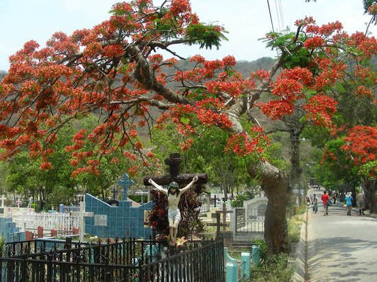 Julio Tours Nicaragua - Day Tours: Malinche tree in a Cementary of North of Nicaragua