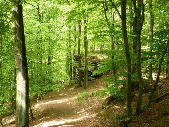 Hotel Club Vacanciel Dossenheim-sur-Zinsel: One of the many great forest trails