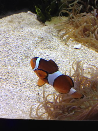 Discovery Place Science : Aquarium
