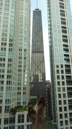 Sofitel Chicago Magnificent Mile: View from our room