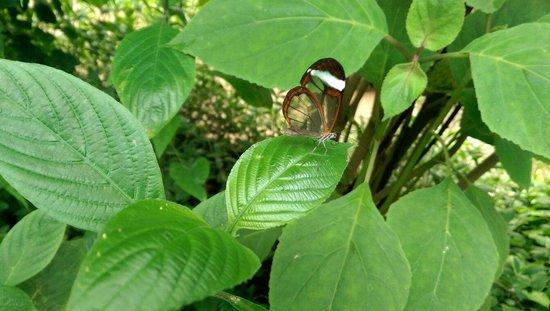 Butterfly World: Butterfly