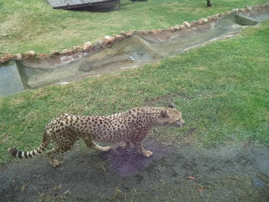Selwo Aventura : Tigres