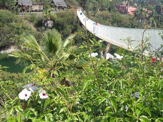 Selwo Aventura : Puentes colgantes