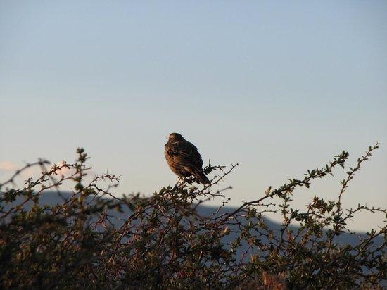 LAGUNA NIMEZ RESERVA NATURAL MUNICIPAL: Aves 3