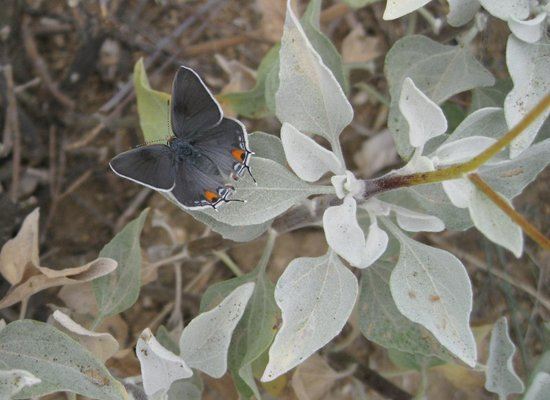 Rincon Mountain Visitor Center: Butterfly along the Garwood Loop trail.