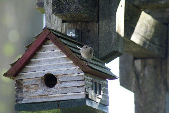 Seasons House B&B : House wren in garden