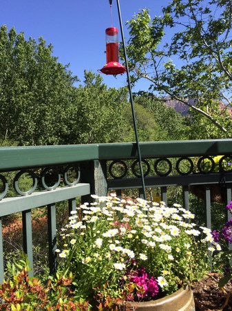 The Inn Above Oak Creek: Breakfast each morning by the flowers & hummers...