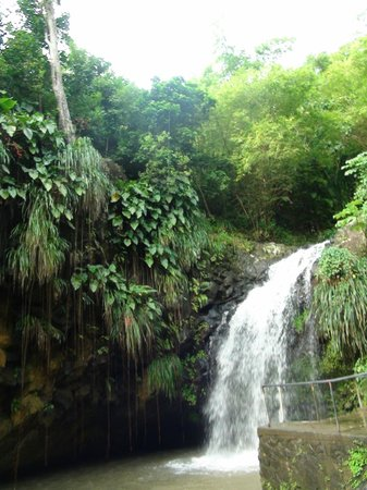 Annandale Falls: Водопад