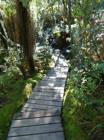 Wai-O-Tapu Thermal Wonderland: Gorgeous rain forret area