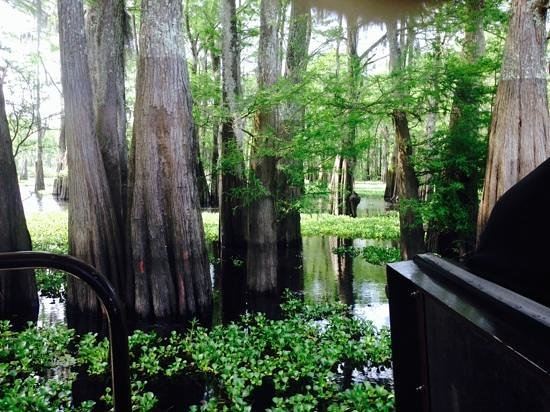 Atchafalaya Basin Landing & Marina- Swamp Tours : Scenery