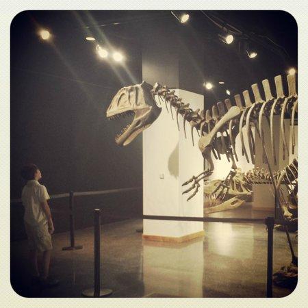 Lafayette Science Museum : admiring the dino