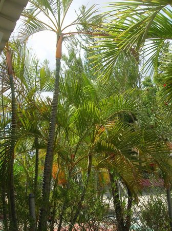 Bonaire Happy Holiday Homes: Lovely palm plantings between patios