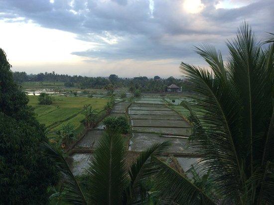 Suly Resort Yoga and Spa: Vu sur rizière