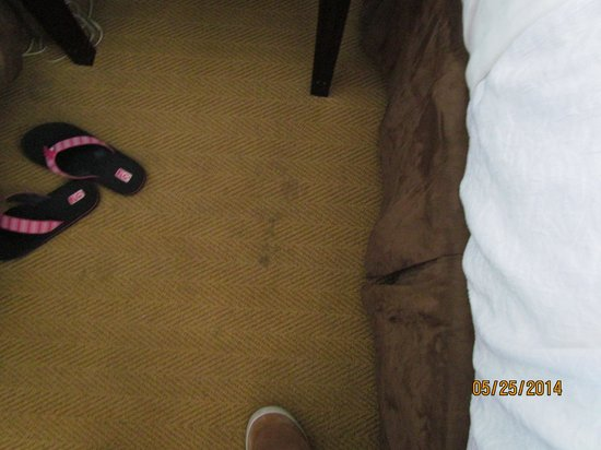 Holiday Inn Hotel & Suites Boston-Peabody : Stain between beds