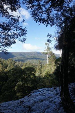 Russell Falls Walk