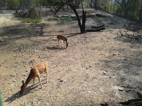 Garchumuk Deer Park