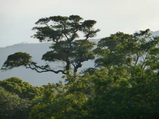 El Establo: view from room