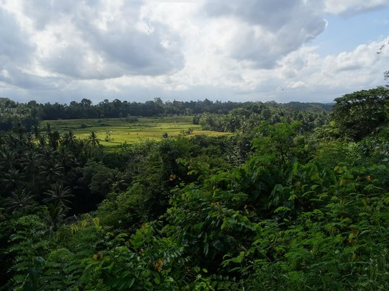 The Samaya Bali Ubud: The view from breakfast