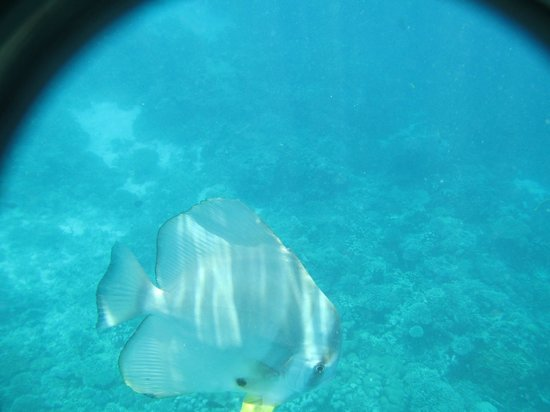 "Baros Maldives: The cute ""stalker"" fish that follows you all the way"