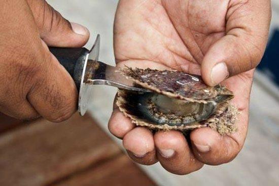 Mannar, Sri Lanka: Pearl Fishing
