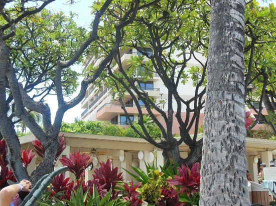 Marriott's Maui Ocean Club  - Lahaina & Napili Towers: grounds