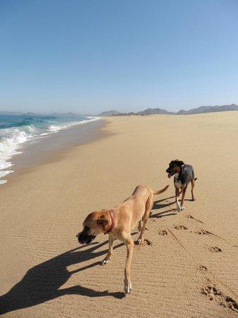 Arriba de la Roca: Morning walk with Retro & Blanca