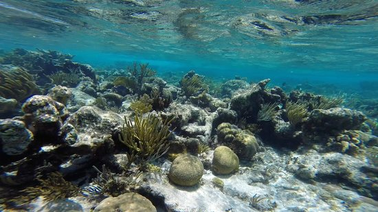 Acquarius Sea Tours: Crystal clear water