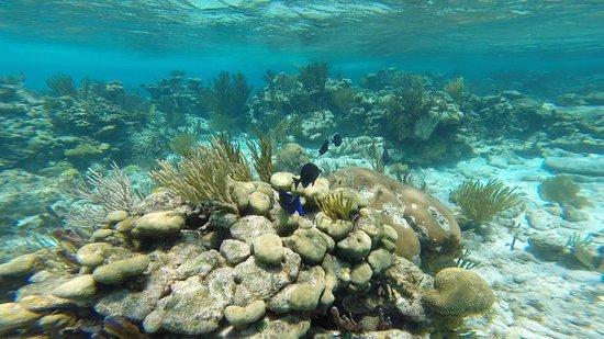 Acquarius Sea Tours: Snorkeling