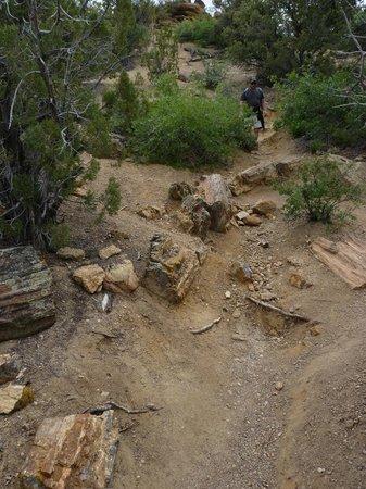 Escalante Petrified Forest State Park: petrified wood
