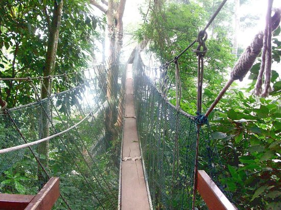 FRIM -Forest Research Institute of Malaysia the Canopy Walk & the Canopy Walk - Picture of FRIM -Forest Research Institute of ...