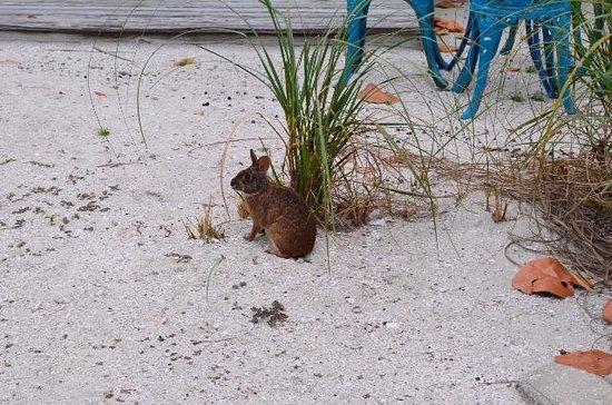 Island's End Resort: cute resident rabbit