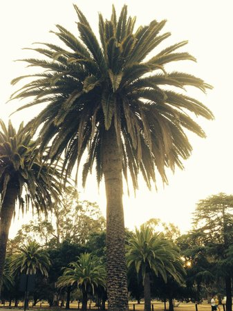 Stanford University: Palm tree on Stanford's campus