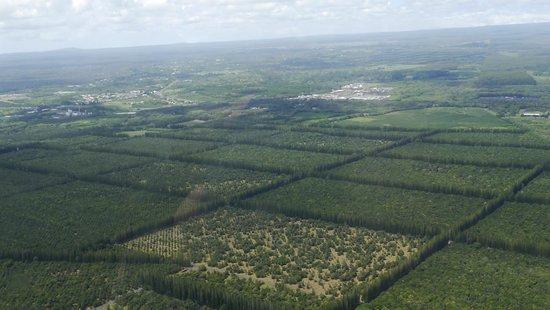 Safari Helicopter Tours: плантации макадамии
