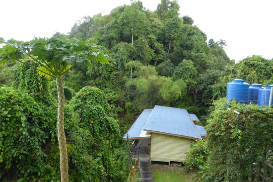 The Last Frontier Boutique Resort: Guest rooms surrounded by rainforest