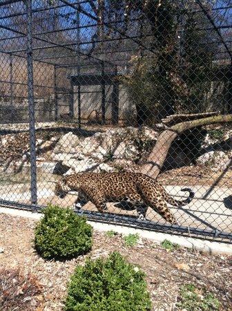 Louisville Zoo: Kitty