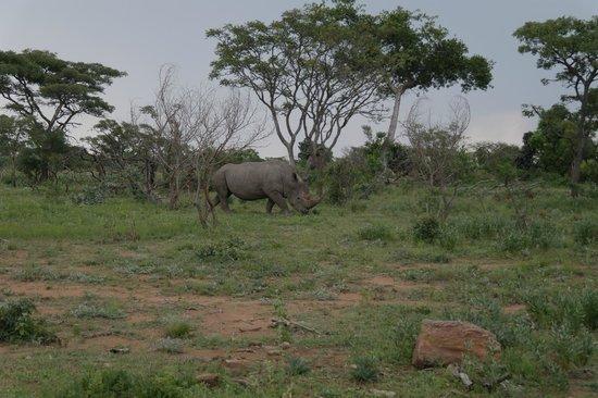 Clifftop Lodge : rhino