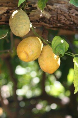 Rifugio degli Dei : In de tuin groeien citroenen voor de zelfgemaakte limoncello