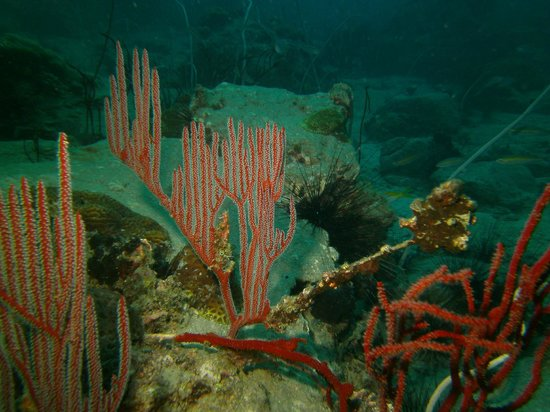 Scuba Nation: underwater harp