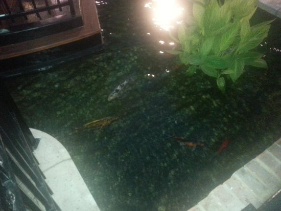 Gaylord Texan Resort & Convention Center: fish in the pond