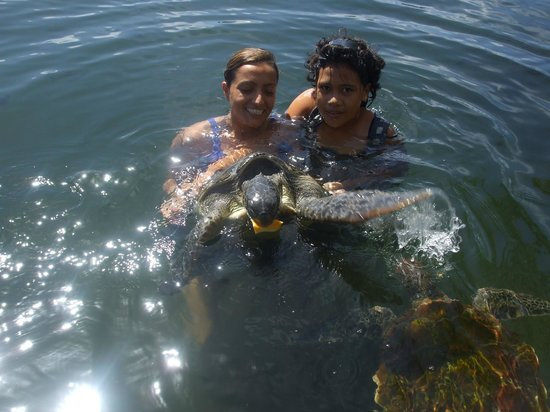 Swimming with Turtles: amazing trip