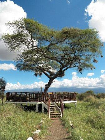 Sentrim Amboseli: Estrade pour le point de vue sur le Kilimandjaro