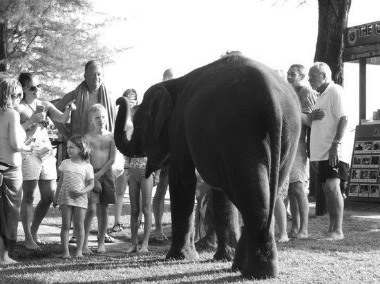 Dusit Thani Laguna Phuket: Elephant on the beach!