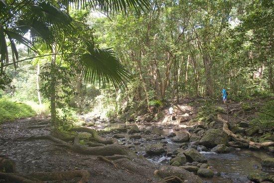 Maunawili Falls: Stream crossing
