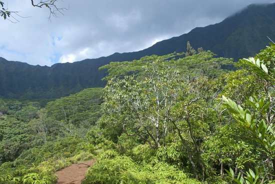 Maunawili Falls: the highest elevation you reach during the hike is very scenic!