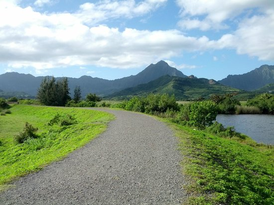 Kawai Nui Marsh: The trail is gravel and very flat the whole way.