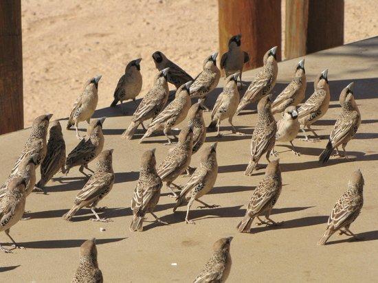 Desert Camp: Gang d'oiseaux